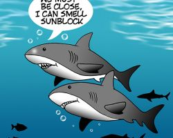 Shark attack cartoon